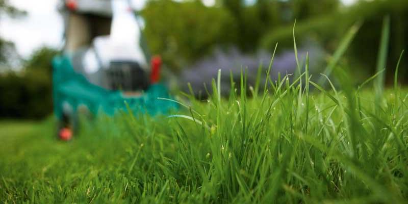 Zabiegi pielęgnacyjne, które pozwolą trawie przetrwać zimę