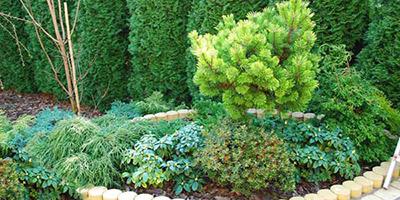 Projekt rabaty z różnych kompozycji roślinnych