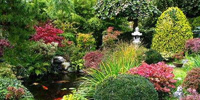 Na co powinniśmy zwrócić uwagę przy zakupie roślin ogrodowych?