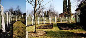 Jak dbać o rośliny w ciepłym okresie zimowym?