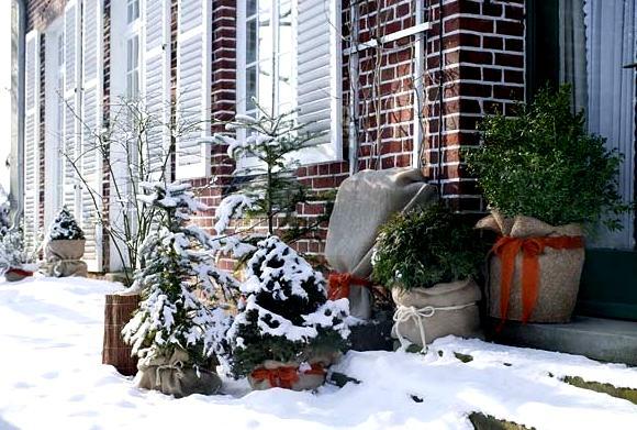 Ochrona roślin doniczkowych zimą