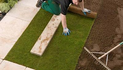 Jak pielęgnować trawnik rolowany?