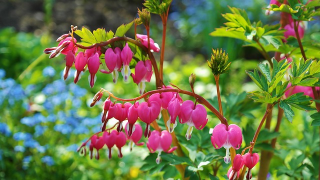 5 najpopularniejszych rodzajów donic ogrodowych
