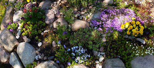 Czy zrobienie skalniaka w ogrodzie to dobry pomysł?