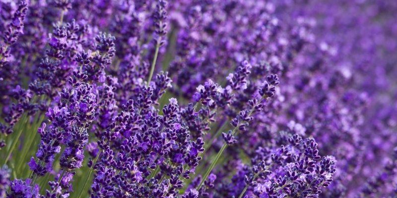 Wysokie donice na tarasie – jakie kwiaty do nich dobrać?