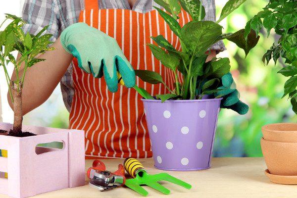 Przesadzanie sadzonek – kiedy to zrobić?