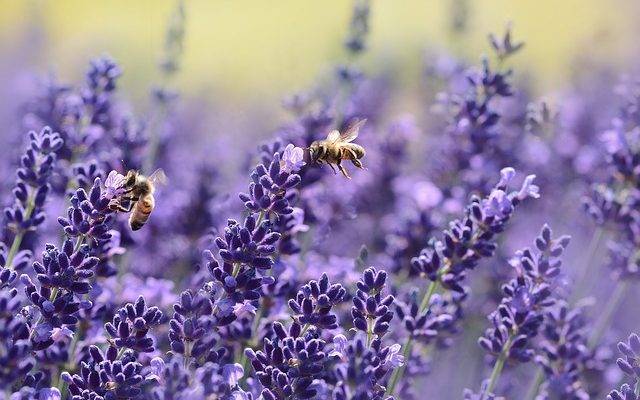 Rośliny odstraszające owady – co posadzić przy altanie?
