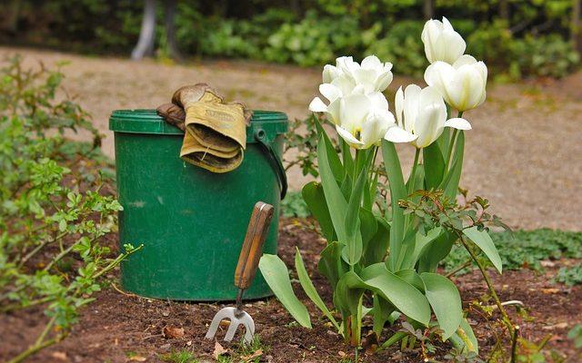 Letni kalendarz ogrodnika – jakie prace czekają Cię w lipcu i sierpniu?