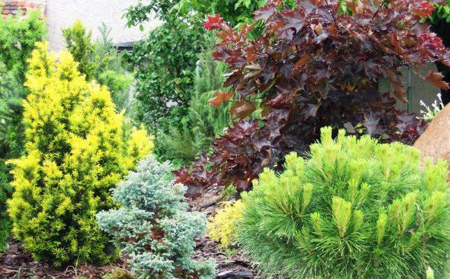 Krzewy ogrodowe na każdą porę roku