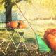 Przygotowanie ogrodu do zimy – porady