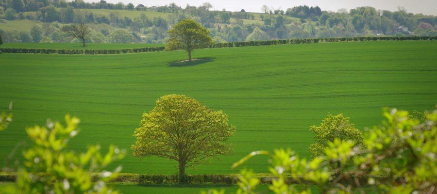 Jak zagospodarować nierówny teren w ogrodzie?