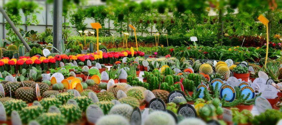 Zapraszamy na Międzynarodowe Targi Ogrodnictwa w Poznaniu!