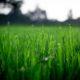Jak zadbać o trawnik w marcu?