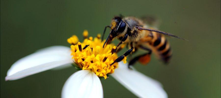 Pszczoły – najlepsi przyjaciele ogrodnika