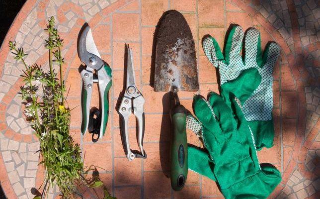 Marcowe prace w ogrodzie – przygotowanie do sezonu wiosennego