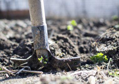 Marzec w ogrodzie! Które prace należy przeprowadzić podczas przedwiośnia?