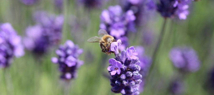 Pylenie kwiatów – kiedy i co pyli podczas wiosny?